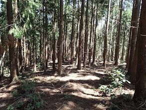 674m付近から植林帯