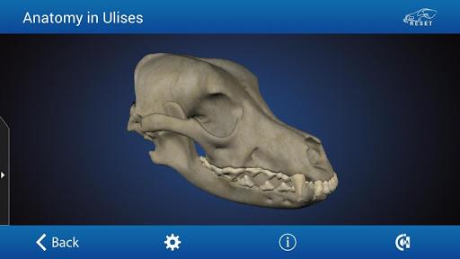 玩免費醫療APP|下載Osteology in Dogs (Licensed) app不用錢|硬是要APP