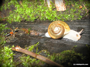 Photo: At a snail's pace at Woodford State Park by Jared Clark
