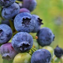 Blueberries  by Wendy Pahl - Food & Drink Fruits & Vegetables ( berry, blue )