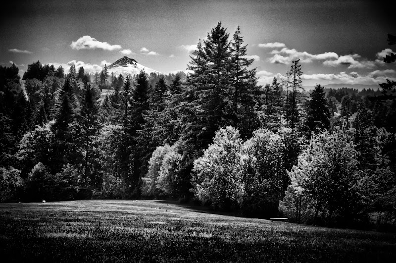 Photo: Mt. Hood taken from Willamette Natl Cemetery It was July 4, and I had a rare few hours to myself after dropping my daughter off at summer school. Naturally, I grabbed the camera.  for #forestFriday +Forest Fridayby +Rudolf Vlček and #breakfastclub +Breakfast Clubby +Gemma Costaand +Andrea Martinez
