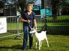 Photo: Rubriek 1: witte lammeren geboren tussen 10-4 en 12-5-2014.  1c. Carla.