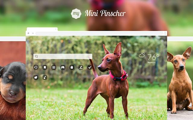 My Mini Pinscher HD Wallpapers New Tab