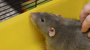 Rat-Boot-Touille thumbnail