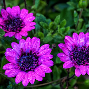 A touch of spring by Matthew Miller - Flowers Flowers in the Wild