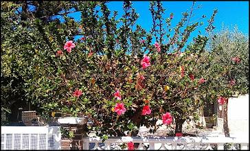 Photo: une maison super charmante à l'ancienne avec une terrasse fleurie comme j'aime