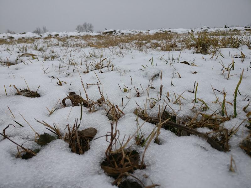 Natura e neve del nord-est di Mattia Zanchin