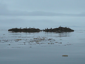 Photo: Sea gulls and ducks on a rock in Stephens Passage.