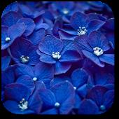Blue flowers. Live wallpaper.
