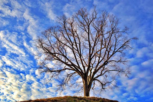 Semplicemente albero di natalia_bondarenko