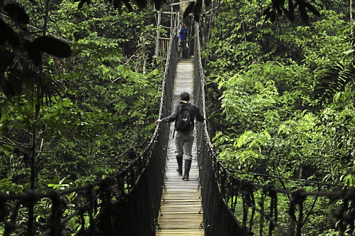 A bridge less travelled: It is estimated that the Amazon has 390-billion trees and 1,300 bird species. The World Wildlife Fund says millions of species still are undescribed. Picture: REUTERS