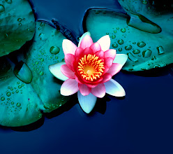 Photo: Brightly Colored Water Lily or Lotus Flower Floating on Pond