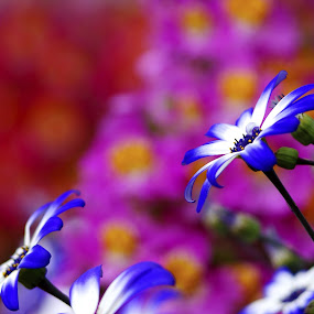 by Mihai Cristian - Nature Up Close Flowers - 2011-2013 ( bokeh )