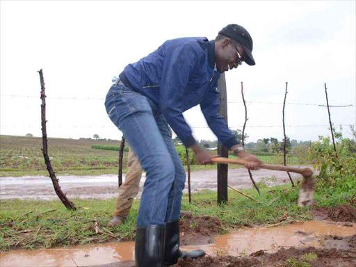 IEBC CEO Ezra Chiloba plants trees at his Mutua home in Kwanza constituency, April 2018. /FILE
