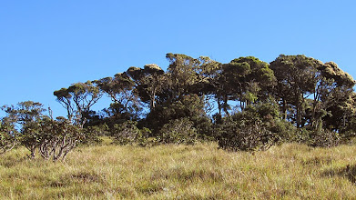 Photo: Horton Plains National Park