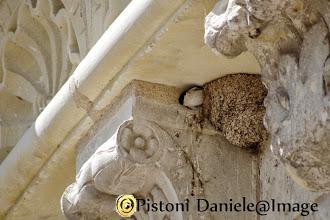 Photo: Rondine al nido