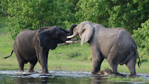 Elephant Rampage thumbnail