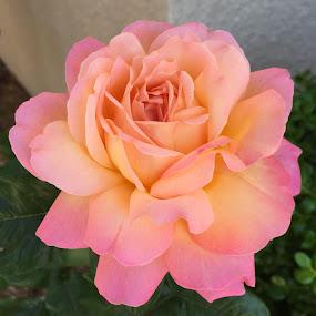 by Lori Nordlund - Flowers Single Flower