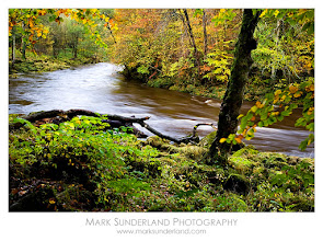 Photo: River Wharfe, Strid Wood  I love the soft diffused light of a still overcast day for photographing autumn colours, as demonstrated here at a bend in the River Wharfe in Strid Wood. A bright white sky reveals the richness of the colours and there's only a little movement in the branches, so long exposures aren't a problem.  Canon EOS 5D, 24-105mm, ISO 100, 1s at f22
