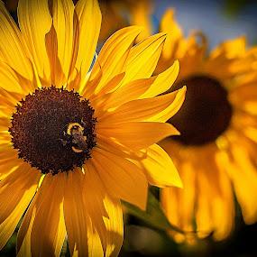 Sunny Days by Nancy Senchak - Flowers Flowers in the Wild