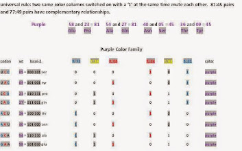 Photo: T/U = 00,    C = 01,    A = 10,    G = 11.  Purple and red color family codons code for the same name amino acids but the patterns and purpose differ.  There is no wobbling, uncertainty or degenerate codons involved here.  This is not redundancy. The purpose, function and folding patterns between the color families differ.  Why in every case do member pairs in same color families that code for the same amino acids break out into 81:45 or 77:49 relationships? ----------------------------- Note: GAA 58 glu should be 111010 not 101010.