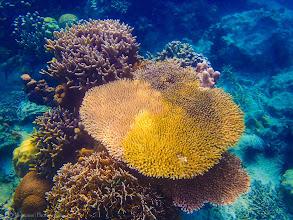 Photo: Tiger Island, Thousand Islands, Indonesia
