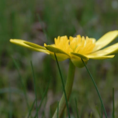primi accenni di primavera di Babi 09