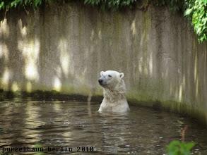 Photo: Knut haelt Ausschau nach Gianna...