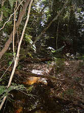Photo: Hiking along and pass small creeks on the second day