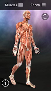 Muscle Trigger Point Anatomy Screenshot