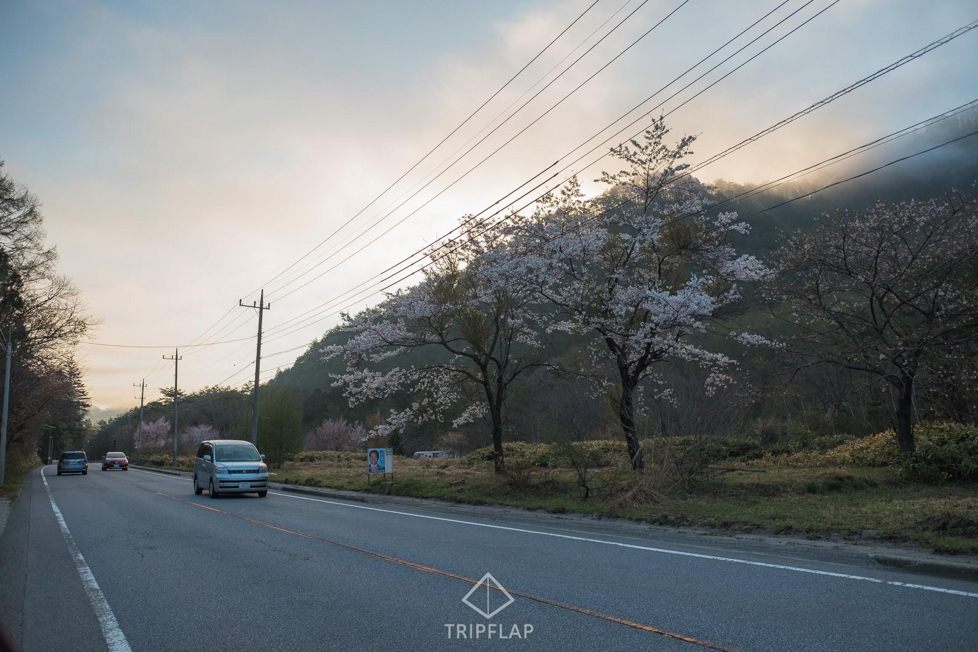 桧枝岐に向かう途中桜がまだ咲いていた