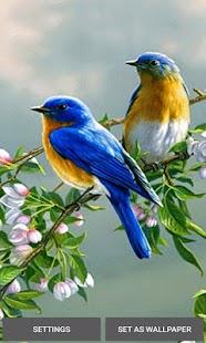 Loving Bird Live Wallpaper - náhled