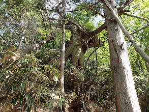 巨木(右から回る)