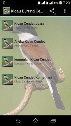 Suara Burung Cendet Juara : suara, burung, cendet, juara, Download, Suara, Burung, Cendet, Gacor, Google, ADmRT0TWo5v3, Mobile9