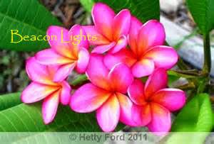 Photo: Beacon Lights Hetty Ford 2014