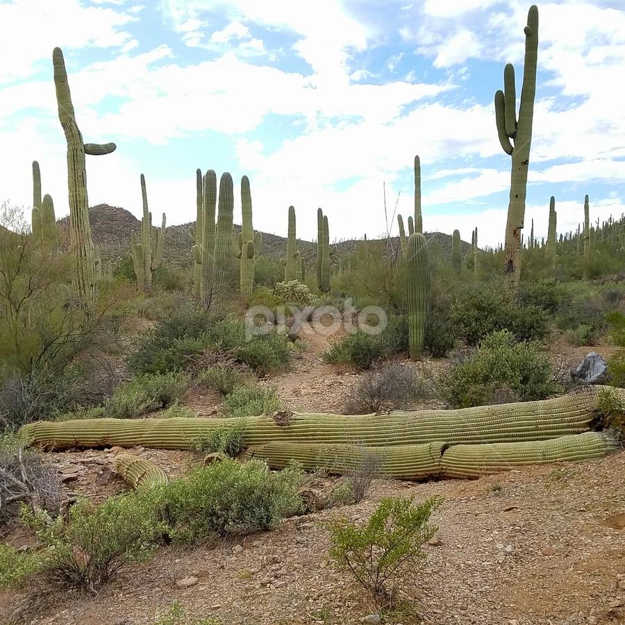 Fallen Angel by Tom MostlyGerman - Landscapes Deserts