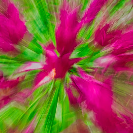 by Jim Jones - Abstract Light Painting ( art, flowers, color, tulips, abstract )