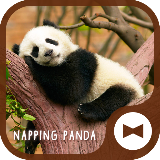 Cute Wallpaper Napping Panda Theme