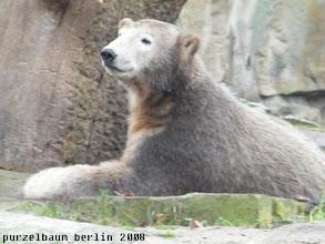 Photo: Ein aufregender Tag fuer Knut ;-)