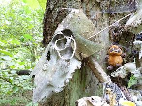 Photo: Череп лося, Винни Пух, череп лисы