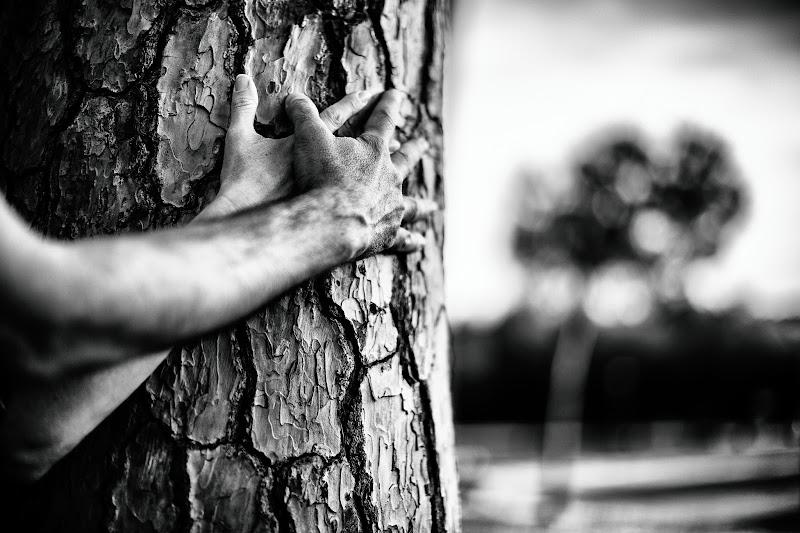 Abbracciando un albero di Tindara