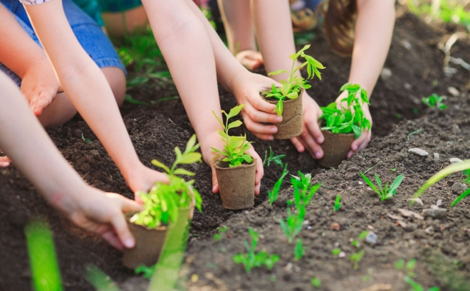 Nên lựa chọn đơn vị trồng cây uy tín, chuyên nghiệp