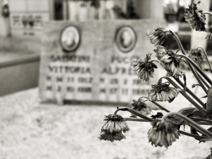 Dried flowers di Luigi Segatori