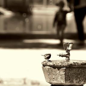 In a hot day by Eugénio Buchinho - City,  Street & Park  City Parks ( water, bird, fountain, sépia )