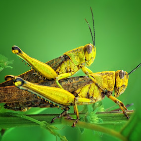 Ride My Love by Irfan Marindra - Animals Insects & Spiders