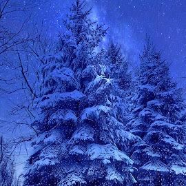 Night snow by Mary Waters - Digital Art Things ( tree, nature, digital art, snow, fine art )