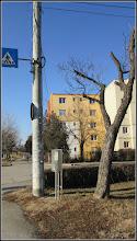 Photo: Arbore trompetă (Catalpa bignonioidea) - diin Parcul Mr.1 - 2017.02.11