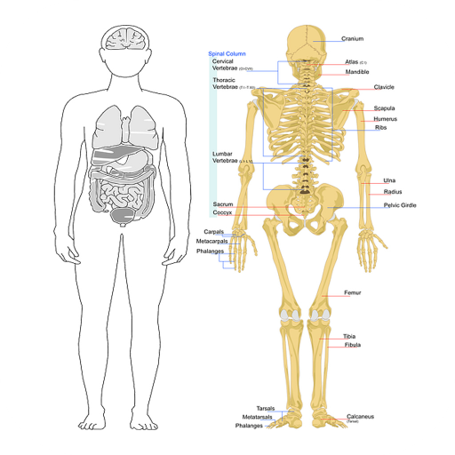 Human Anatomy and Physiology 書籍 LOGO-玩APPs