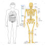 Human Anatomy and Physiology APK icon