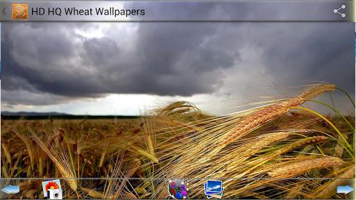 免費下載攝影APP|HD HQ 밀 배경 화면 app開箱文|APP開箱王